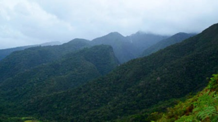 Agricultores reforestan bosque en Área de Conservación de la Cordillera Escalera