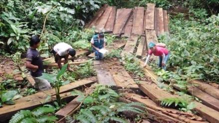 Taladores ilegales armados desalojan de sus tierra a asháninkas en Satipo