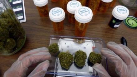Minsa creará un comité para evaluar el uso medicinal de la marihuana