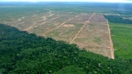 Perú perdió más de 1 millón de hectáreas de selva en  15 años