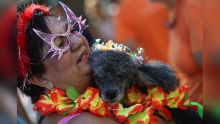 FOTOS   Realizan desfile contra el maltrato animal en el Carnaval de Río