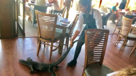 Valiente mesera echó a un lagarto que causó pánico en un restaurante