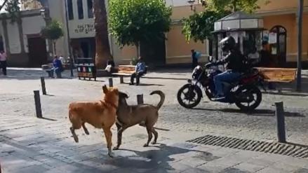 Mordeduras de perros se incrementaron en 200% en Arequipa