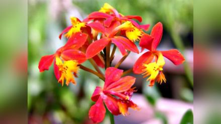 Reportaje | ¿Por qué las hermosas orquídeas del Perú están en peligro?