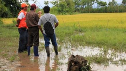 Desborde del río Cañete afectó 20 hectáreas de cultivos