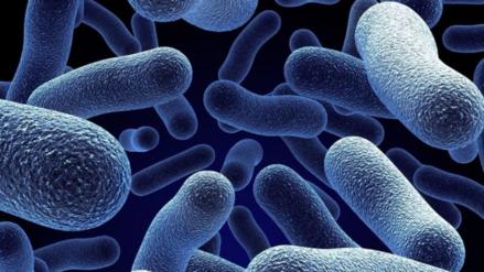 La lista de bacterias más peligrosas para el ser humano