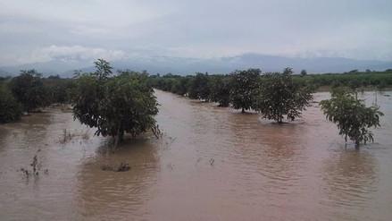 Huaico en El Carmen arrasó con cultivos de algodón y maíz