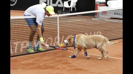 Perros abandonados se convierten en recogebolas de Tenis en Brasil