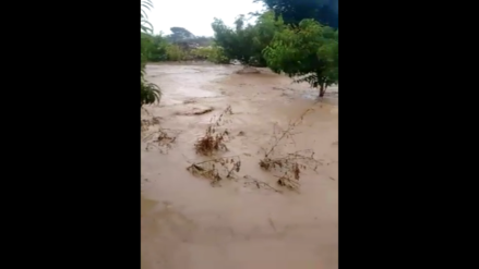 Plantaciones de cultivos afectadas por desborde río en Asia y Mala