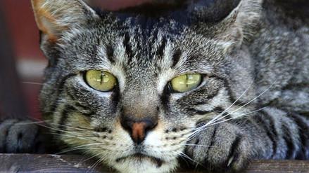 Colombiano es condenado a seis meses de cárcel por comer gatos