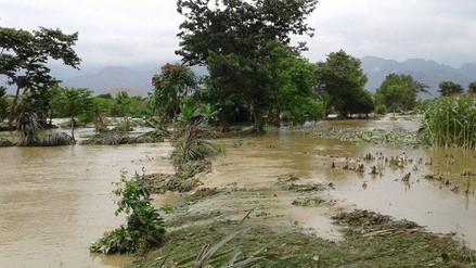 Laredo: 30 hectáreas de cultivo son afectadas por desborde de río Moche