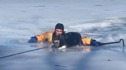 Un bombero arriesgó su vida para salvar a una perra atrapada en estanque