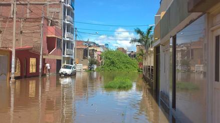 Lluvia ocasionó caída de un árbol en Chiclayo