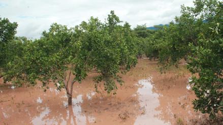 Desborde del río Huallaga afectó distrito San Cristóbal de Puerto Rico