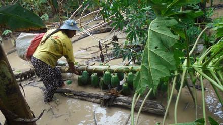 Satipo: cultivos dañados por desborde de los ríos Tambo y Ene