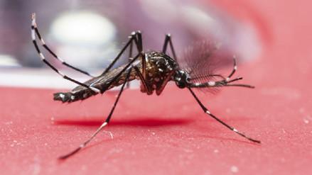 Así de Claro: ¿Cómo prevenir el dengue tras las lluvias que afectan al Perú?