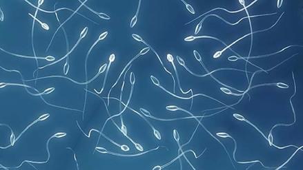 La fórmula matemática que describe el nado de los espermatozoides