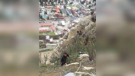 Policía de La Oroya rescata a perros que se encontraban atrapados en abismo