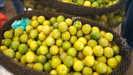 Agricultores de limón piden apoyo aéreo para trasladar el cítrico a Lima