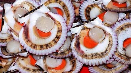 El 80% de la producción peruana de conchas de abanico está afectada por El Niño