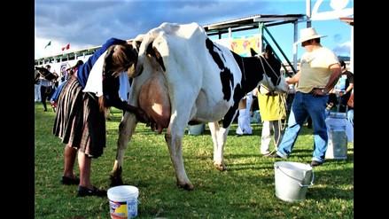 Productores de leche de Cajamarca han perdido S/ 3 millones por El Niño