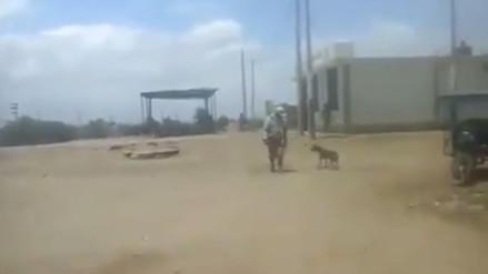 Chiclayo: indignante maltrato de un hombre a un perro en Mocupe