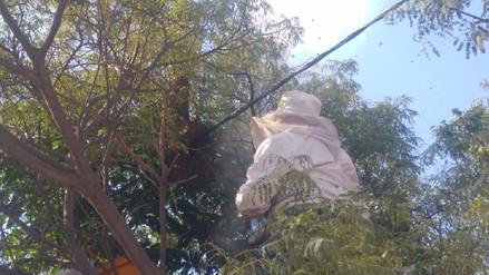 Panal de abejas alarmó a vecinos de Socabaya