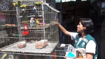 Arequipa: rescatan a ave silvestre que era tratada como mascota