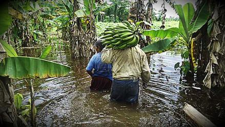 Bonos no serían suficientes para reactivación agraria