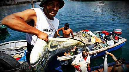 El Niño Costero favoreció la proliferación de varias especies para la pesca