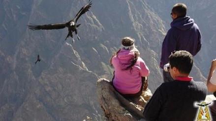 Arequipa: ciudadanos tendrán ingreso libre al Valle del Colca