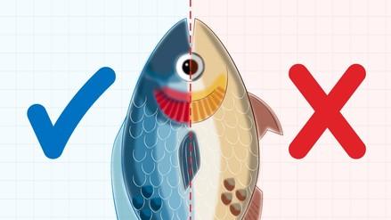 Infografía   Semana Santa: ¿Sabes cómo identificar si un pescado es fresco?