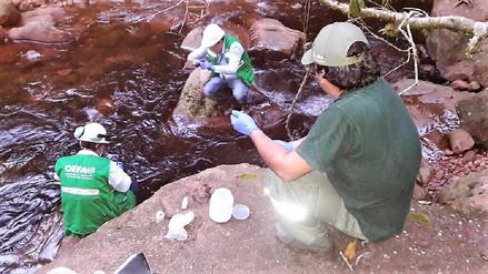 Reportan derrame de petróleo en quebrada Sabaloyacu y el río Caynarachi