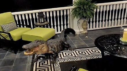 Una familia encuentra un caimán de tres metros en la sala de su casa