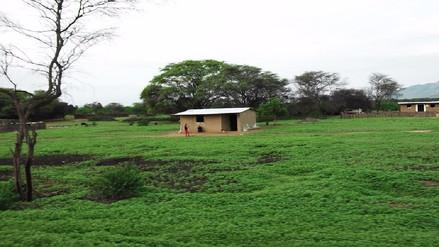 Más de 12 mil hectáreas de bosques secos se regenerarán luego de las lluvias