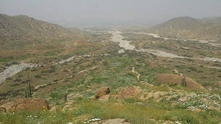 Laredo: lluvias crearon nuevo ecosistema en periferia del distrito