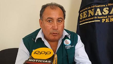 Vacunan contra el cólera a 40 mil cerdos tras lluvias en Lambayeque