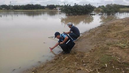 Criarán tilapias en lagunas formadas por las intensas lluvias en Olmos