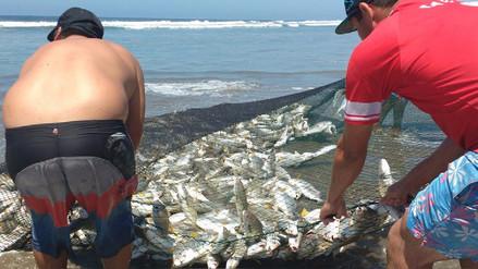 Lambayeque: extracción de especies marinas se recupera en un 80%