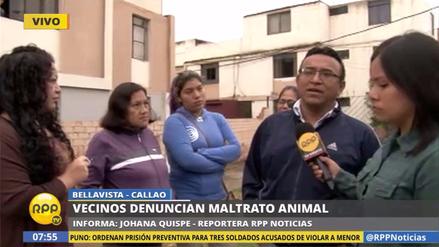 Vecinos acusan a sujeto de atacar a machetazos a perro rottweiler en Bellavista