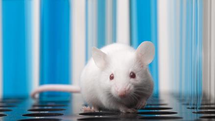 Eliminan el VIH en ratones a través de la edición genética