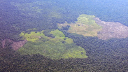 Colombia: ¿cómo se lucha contra la deforestación tras la salida de las Farc?