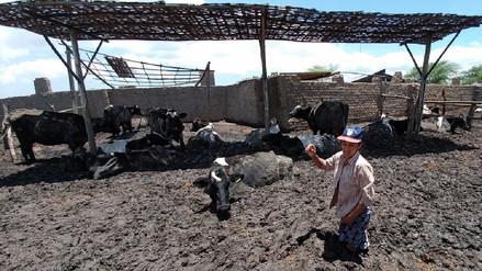 Vacunan 28 mil cabezas de ganado contra el ántrax tras lluvias