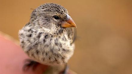 Reportaje | El difícil vuelo de las aves en Galápagos
