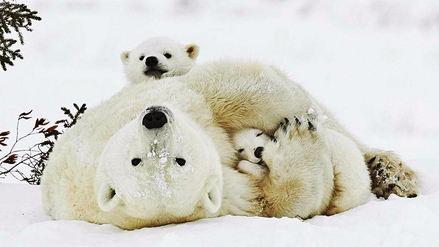 Estas son las 5 madres más abnegadas del Reino Animal