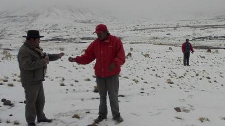 Andahuaylas: bajas temperaturas generan muerte de alpacas y ovinos