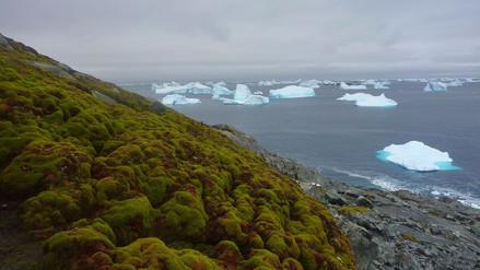 La Antártida se está volviendo verde por efecto del cambio climático