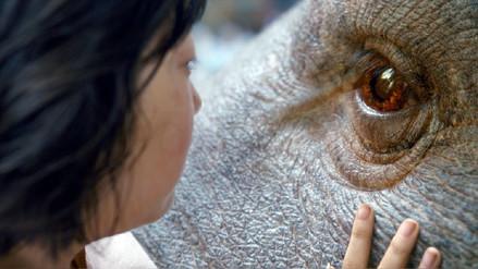 Cannes: Netflix sufre abucheos en proyección de película
