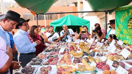 Se realizó con éxito el XVIII Festival de la Papa Amarilla en Huánuco