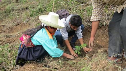 Serfor inicia reforestación en zonas altoandinas de Lambayeque